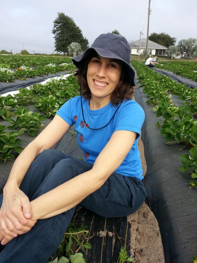 Me u-pick strawberries 12-26-13