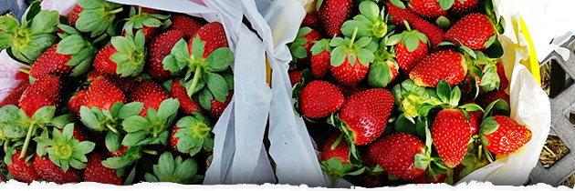 Eating Local – Picking Organic Strawberries